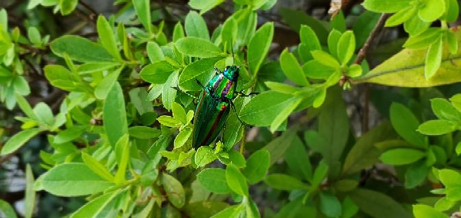 これ何ていう虫ですか?