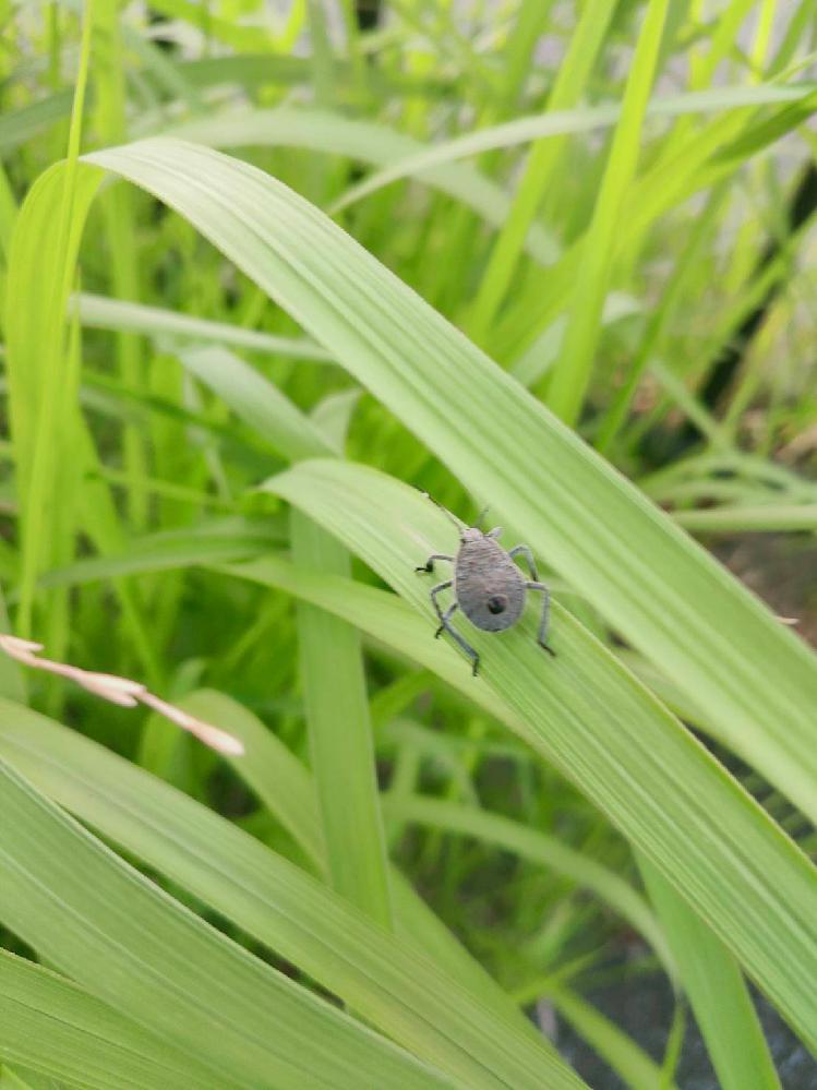 この虫は何でしょうか?