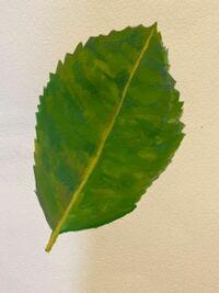 葉っぱの葉脈ってどんな風にポスターカラーで描いたら良いですか?いまこんな感じです。↓ 葉脈って絵の具ならどんな風に入れたら良いですか?  もしも、私の現時点での出来のアドバイス等ございましたら、それも教えて頂ければ幸いです。