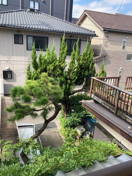 2階の窓から見える自宅のカイヅカイブキの木ですが、 高齢者が住んでいますが、早めに切り倒した方が良いですか? カイヅカイブキってどんどん大きくなりますよね?