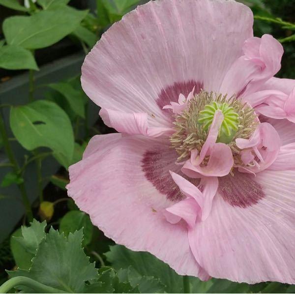 この花の 名前お分かりでしょうか? よろしくお願いします