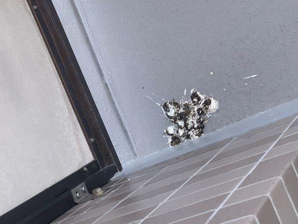 マンションの5階に住んでいます。 今朝、大量の鳥の糞が落とされていてビックリしました。 この糞は1羽の鳥が集中的にしたものでしょうか? 多数いた感じでしょうか? 以前も、2.3回落とされたことはありますが、こんなに一度に大量は初めてです。 マンションの5階は鳥が来やすいのでしょうか? オススメの鳥の糞対策もありましたら教えてくださいm(__)m