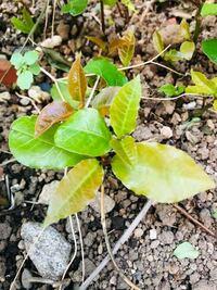 この葉っぱの名前を教えて下さい。 よろしくお願い致します☆