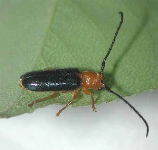 知恵袋で何の虫か質問するとすぐに回答がきますよね。なぜそんな虫に詳しい人が沢山いるのか疑問なので、この画像の虫の名前(私が適当にネットで拾ってきた画像)と、なぜこの虫を知っていたのかを答えていただきたい です。よろしくお願いします。