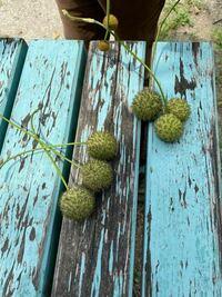 これはなんの植物かわかりますか?