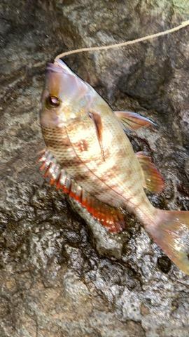 これは、なんていう魚ですか?