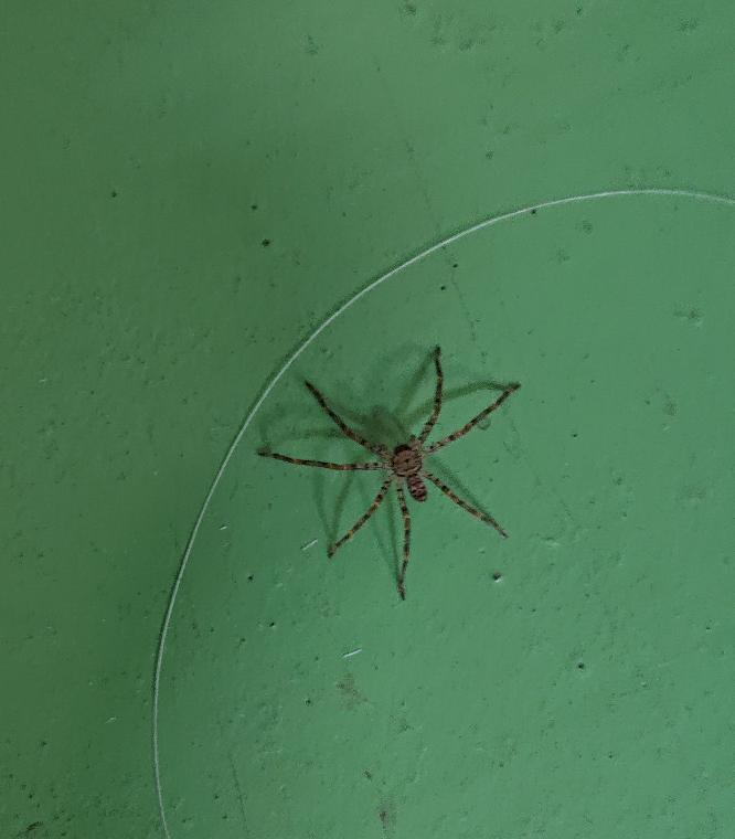 画像の蜘蛛の名前を教えてくれませんか?
