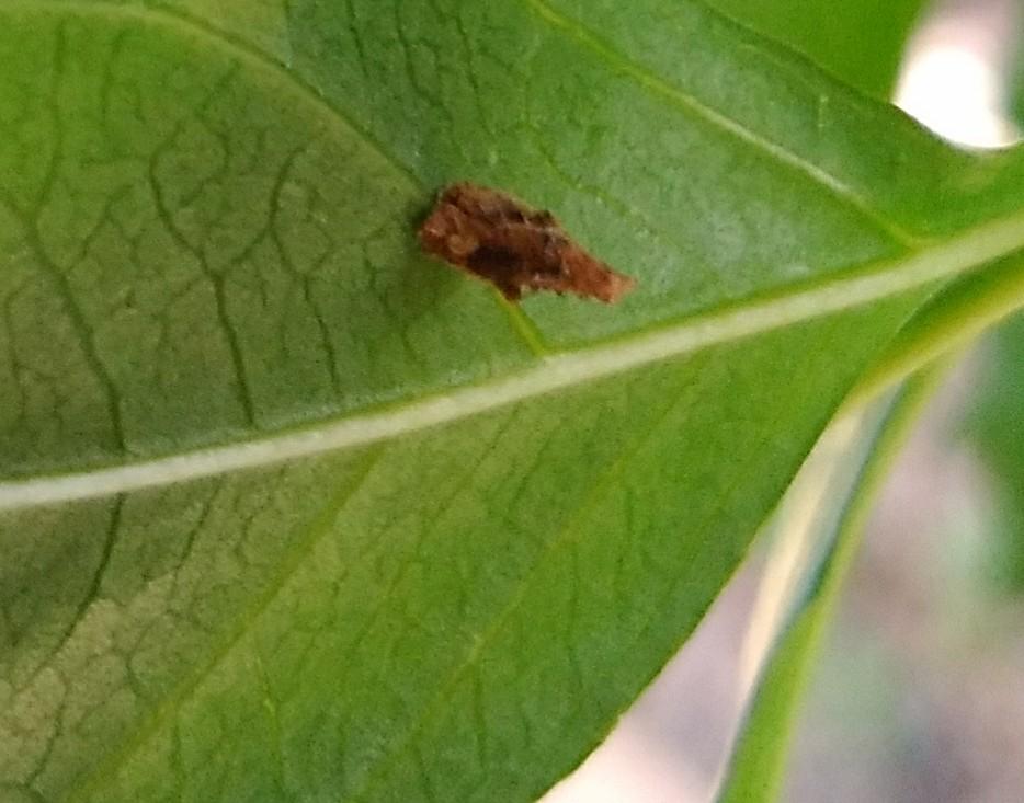 分かりにくい写真ですみません。 画像の小さいみのむしみたいな虫の名前はなんですか?
