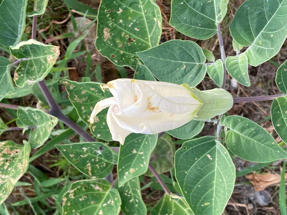 この植物は何ですか? 知っている方いたら教えてください!