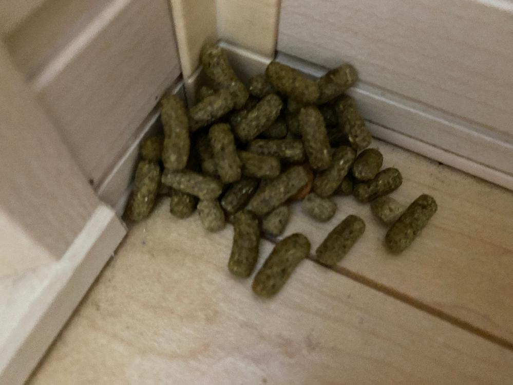 部屋ンポ中に部屋の隅に餌が出されてあったんですけどなんでですか?