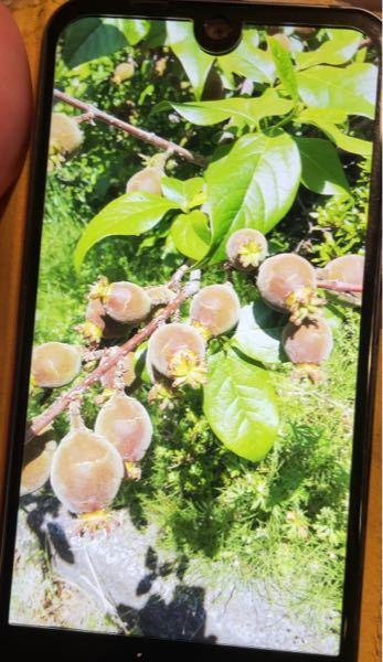 この植物の名前を教えて下さい!
