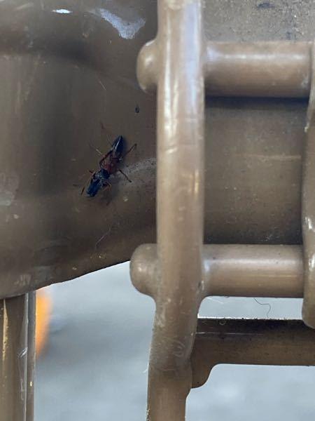 【観覧注意】虫の写真があります この虫の名前がわかる方居たら教えて下さい。 フェンスの上を、アリと紛れて歩いていました。 大きさは、0.8〜1cmぐらいで、ありくらいでした。 頭らしき部分がパカッと開いたりもしていました。 歩いていたのであまり良く撮れませんでした。 画質悪くてすみません。