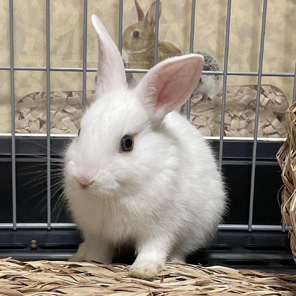 このウサギの種類わかる方いますか?