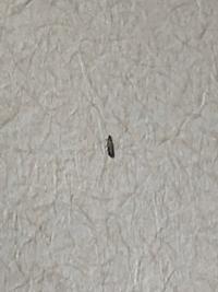 (虫の画像注意)  家の和室に出ました。 なんて虫かわかる方教えて頂きたいです