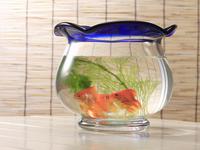 ドラマでよく見るシーン。 金魚鉢に金魚と水草。エアポンプ無し。これで本当に飼育可能ですか('_'?) よろしくお願いします。
