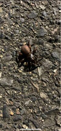この蜘蛛の名前を知りたいです。