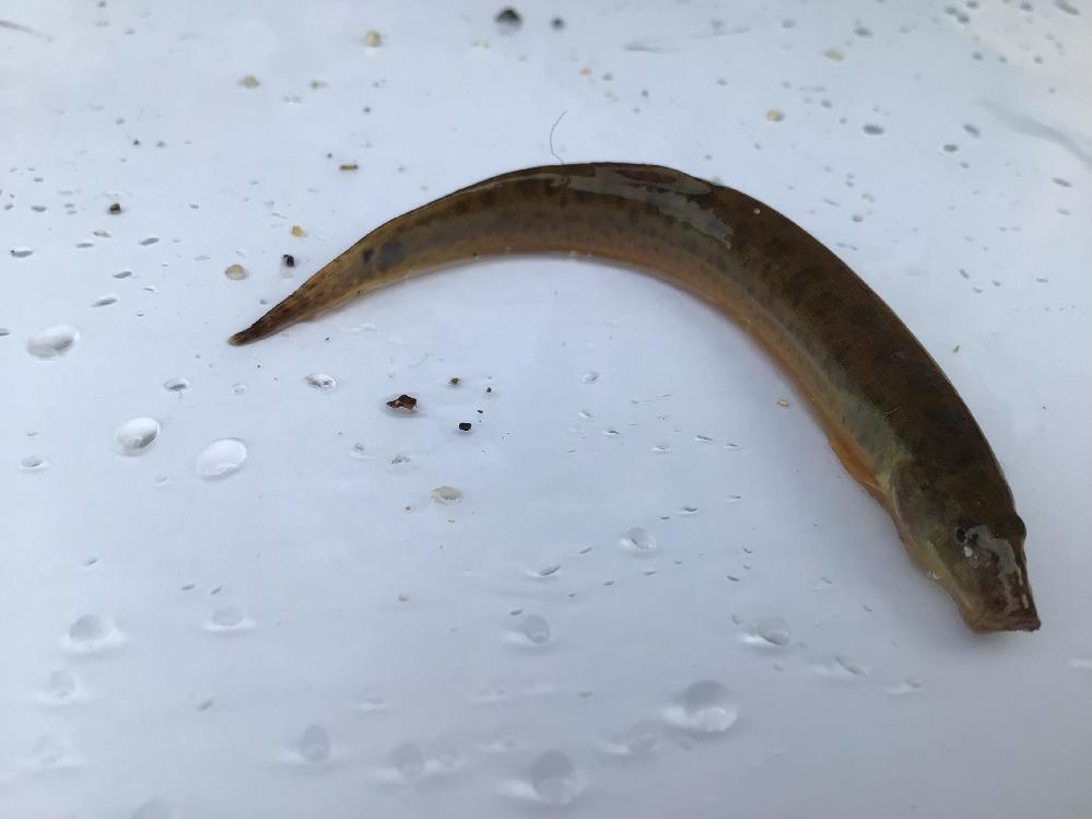 この魚の名前を教えてください