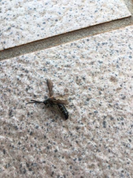 最近庭にこの虫が多くいるのですが、蜂でしょうか?