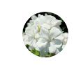 この花がなんという花かわかる方いますか? 画像が見ずらくて申し訳ないです
