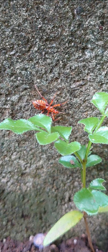 庭にいたのですが、毒グモでしょうか?