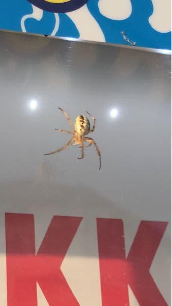 この蜘蛛ってなんですか?