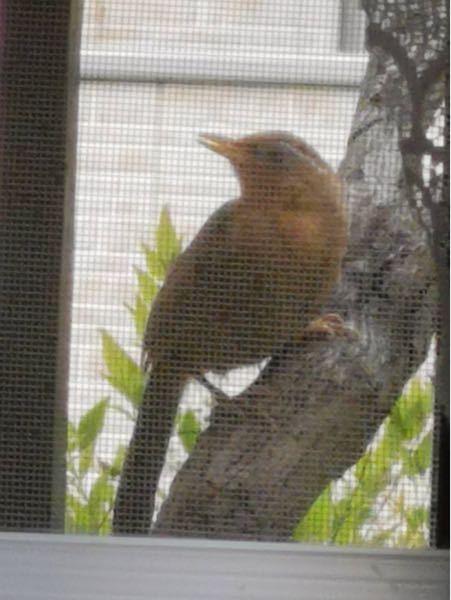 【写真あり】家の庭に鳥がいたのですが、これは何の鳥ですか?