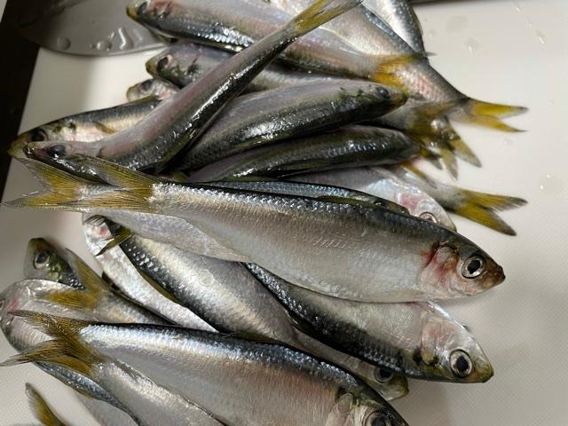 この魚は何という魚なのでしょうか。 頂いたのですが名前がわからず食べ方で困ってます。 わかる方教えてください!!