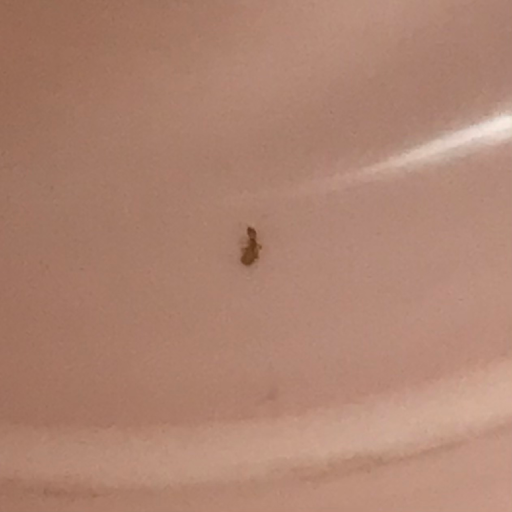 この虫なんですか?? コップ出したら入ってました 体長は1mmぐらいで見た目はアリみたいです