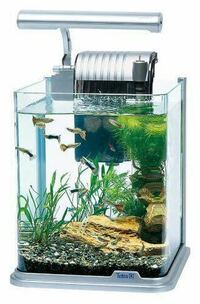魚と喋る為に熱帯魚を飼いたいと思ってる孤独なお年寄りが増えているのですか?