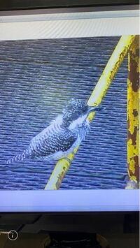 この鳥の名前わかる方いらっしゃいますか?