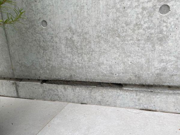 ドロバチの巣でしょうか? コンクリート塀のつなぎ目?目地?に泥のようなものがくっついています。 少し前まではなかったので、、、。 お分かりになるからおりましたら、お願いいたします。