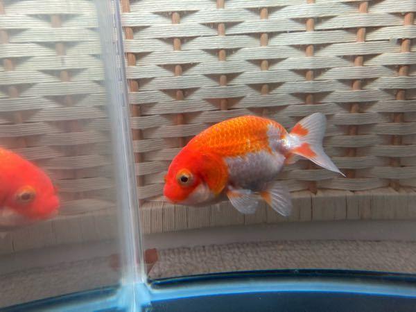 金魚の病名と治し方を教えてください。