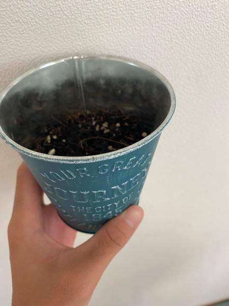 最近、自分の部屋で植物を育てようと思い。 DAISOで小さいひまわりとラベンダーを購入しました。 植物を育てた経験はなく、中学生の時に技術の時間でトマトとバジルを育てたぐらいです。(現高2)育て方よくわかんない のでとりあえず缶みたいな植木鉢を2つ用意してたしか、それぞれひまわり種数粒とラベンダー種やや多め入れて、残ったのを混合で普通の植木鉢の中にありったけ入れて土を被せました。水やりもよく分かんないのでとりあえず一日一回朝にテキトーにやってます。この先どう飼育すれば良いですか?水やりのタイミング、量なども教えてください。 ちなみ写真のように小さいやつ2つは室内、普通の植木鉢は外に置いてます。