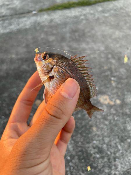 この魚はなにですか?
