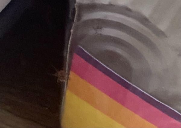 これはなんて言う蜘蛛ですか?