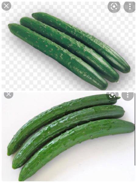 きゅうりってぶら下がってなってますよね? お店に売ってあるきゅうりを見る場合、どっちが上で、どっちが下になってるか、見分ける方法はありますか? あとたまに切ってみて白くブヨブヨスポンジみたいに片方なってる場合があるのですが、あれは上の方であってますか? 片方は緑色してて、カリカリしてます。 白くなるのは水分が抜けてるからと記事では書いてあったのですが、ぶら下がってなってたので、重力で水分は下にいって、下は水分も含んでカリカリだけど、上は日にちが経つと白くなるとゆー認識であってますか?