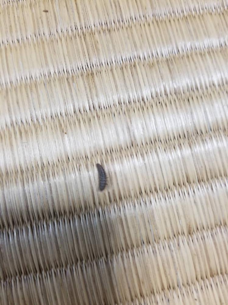 この虫が家にいっぱいいるのですが、何の虫かわかりますか。