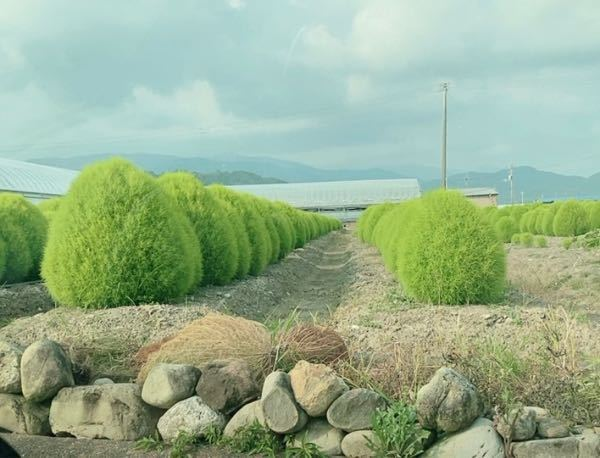 この植物の名前を教えてください!!
