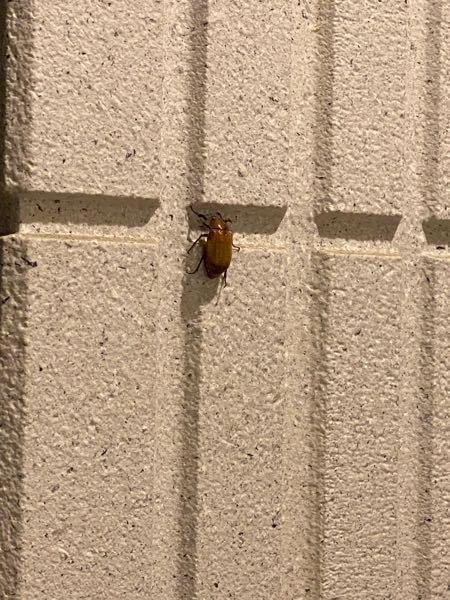 この虫なんですか? 玄関にいました