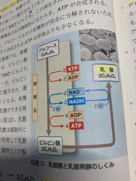 高校生物 発酵 この図の中で、脱水素酵素は何ですか? また、NAD とNAD+の違いはなんですか?