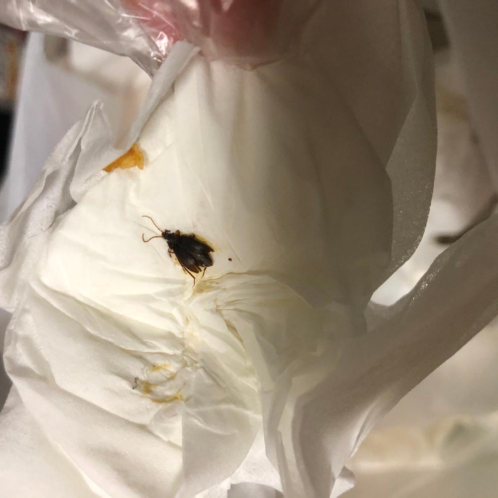 閲覧注意 これはなんの虫ですか?ゴキブリの子供でしょうか?;;
