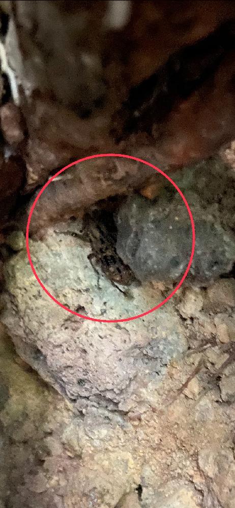 画質が悪くてすいませんm(_ _)m 山の方で見つけました。この虫の名前もし知っている方がいれば教えてください!
