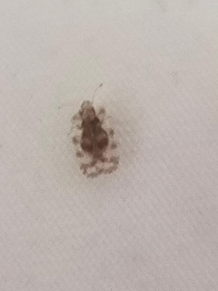 洗濯物についていました。 なんという虫でしょうか? 害は、ありますか? お願いします。