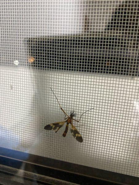この虫って何て虫ですか?また害はありますか?