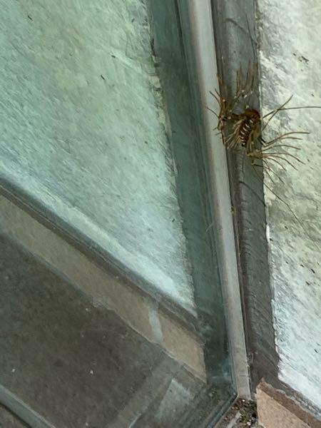 昨日初めてみたのですがこの長くたくさんある虫はなんですか? 分かりにくい写真かも知れませんがわかる方お願いします。