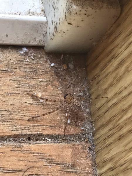 この蜘蛛はなんですか?(写真見づらくてすみません)