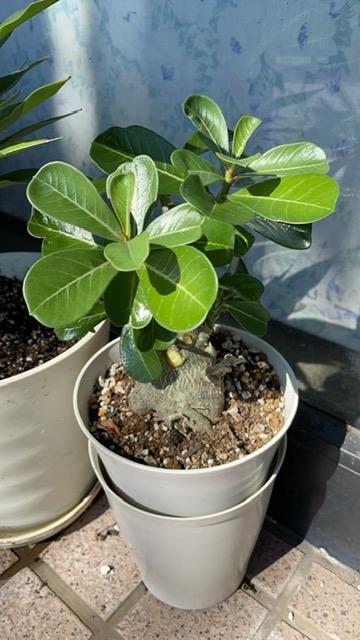 画像の観葉植物の名前を教えて下さい