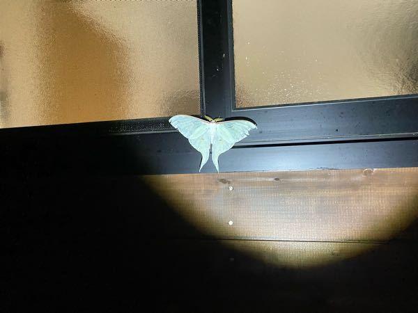 これはなんという蝶ですか?