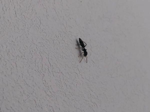 おしりが長く、脚の色が少し赤?っぽいアリが1匹家に出ました。 ティッシュで丸めてゴミ箱に捨てたんですけど、これは害虫でしょうか?