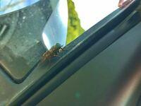 この虫なんですか?? 山と海に挟まれた道路に車を止めると、 たくさん寄ってきます。 囲まれています。  刺しますか?